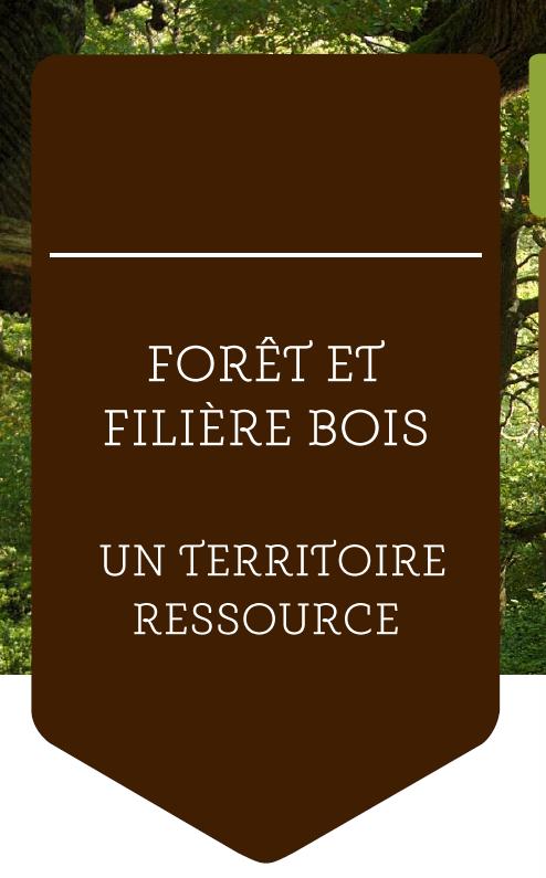 capture filière bois