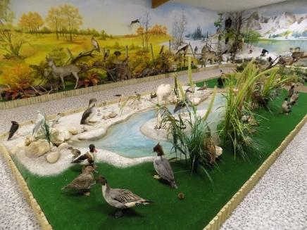 Salle d'animaux naturalisés
