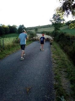 Tous les jours, on accompagne le troupeau de brebis