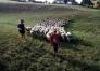 ici, on peut conduire le troupeau avec le fermier